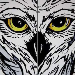images_venture_owl